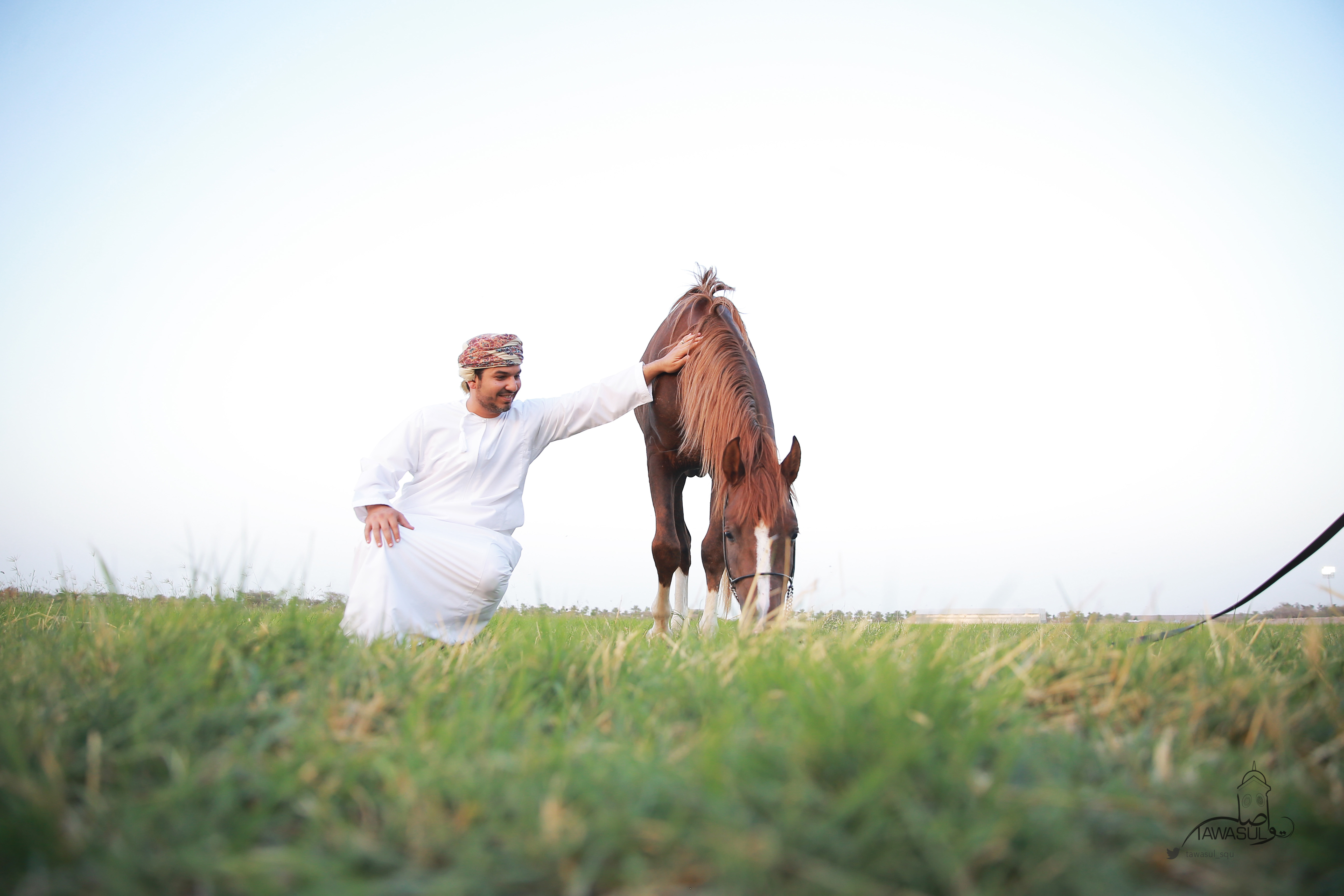 A new study examines the pedigree of horses in Oman